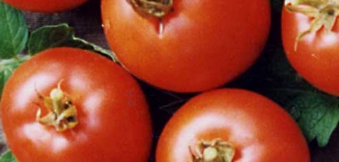 Tomato of the Week: Carmello