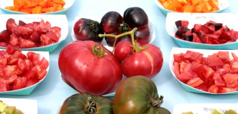 5th Annual Tomato Tasting