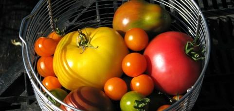 Tim's Tomato Tasting video