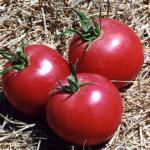 Momotaro tomato
