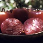 Oregon-Spring tomato