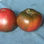 Pink Berkeley Tie-Dye tomato