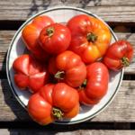 Katja tomato