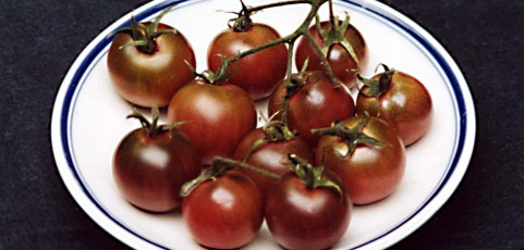 Tomato of the Week: Black Cherry