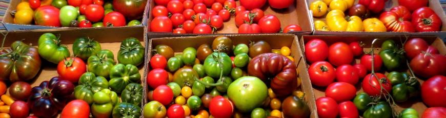 2020 Tomatoes